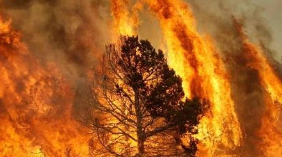 immagine di incendio boschivo